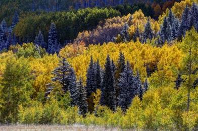 201310050938_Aspen_CO.Maroon Bells - Foliage