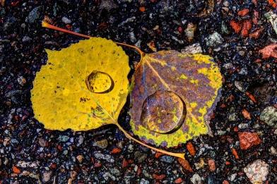 201310051319_Aspen_CO.Maroon Bells - Twin Leaves